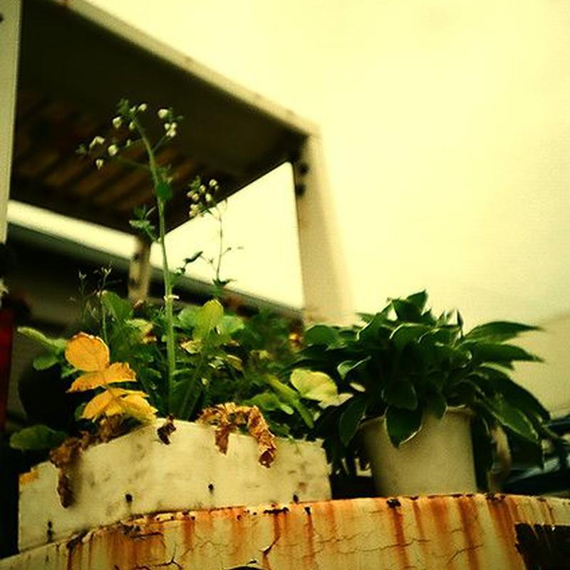 フォークリフトの上に植物???