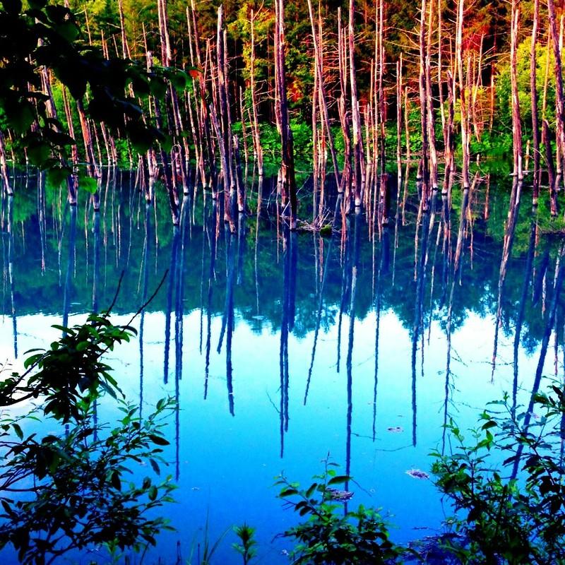 青い池 in 美瑛