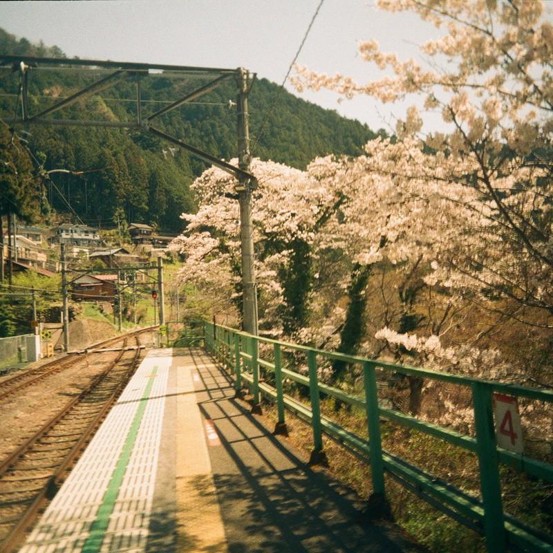 桜の似合う駅