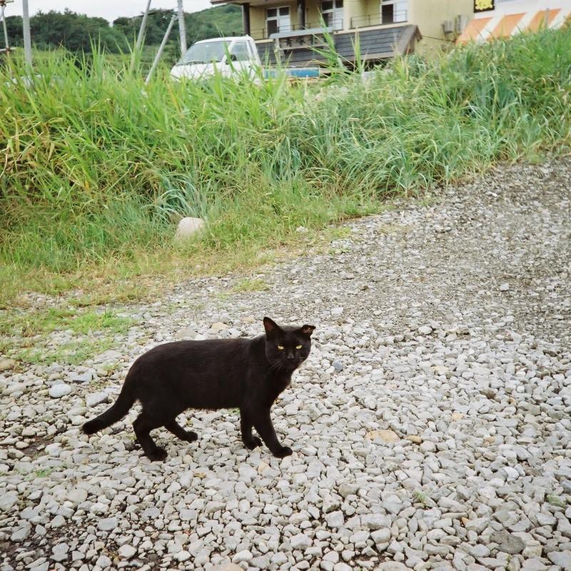 海辺の黒猫さん