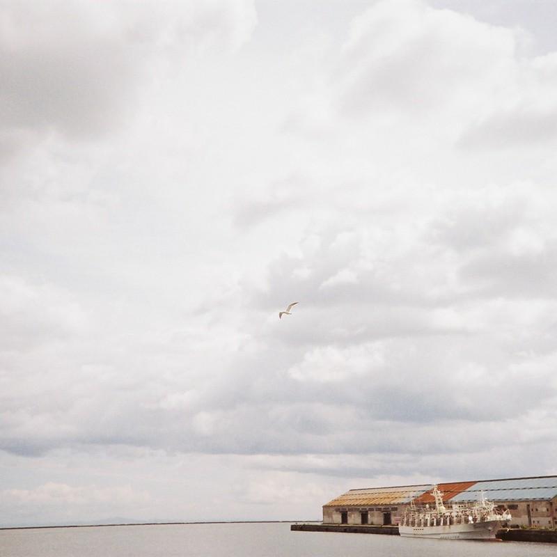 曇り空とカモメさん
