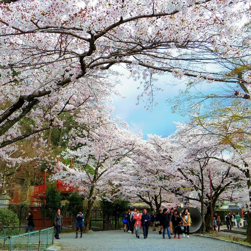 『君と見た春』