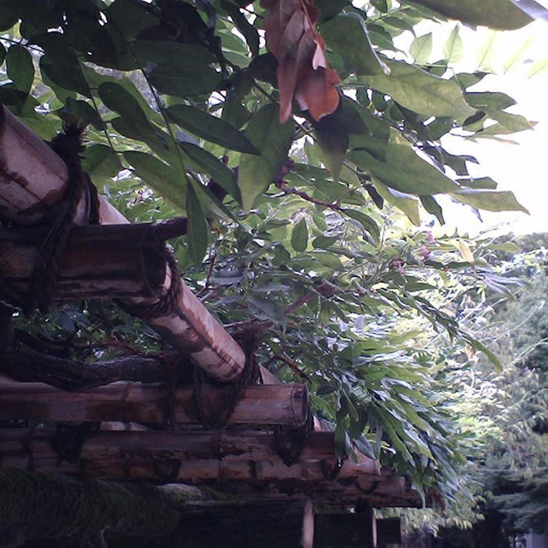 自然の屋根