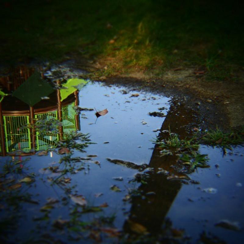 雨上がりの風景