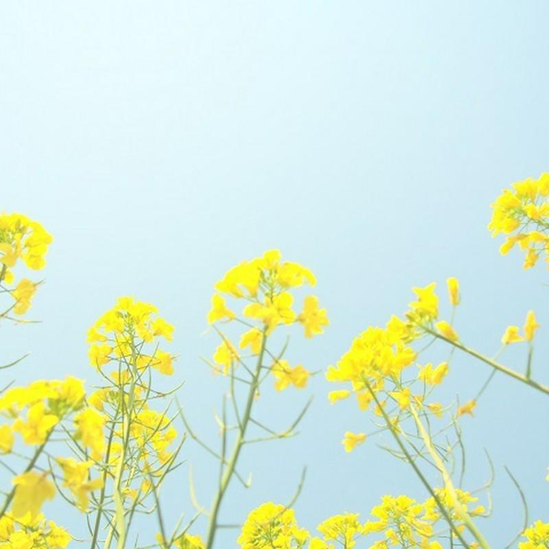 黄色と青空