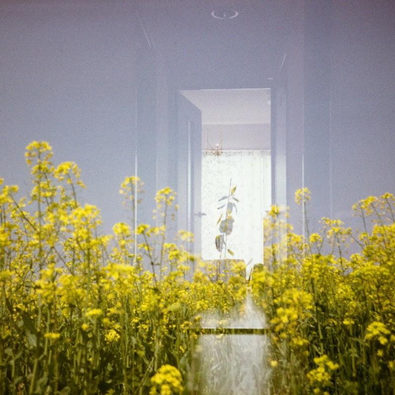 菜の花部屋