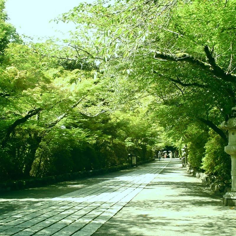 緑に囲まれた道