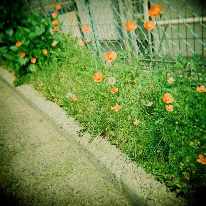 poppy road