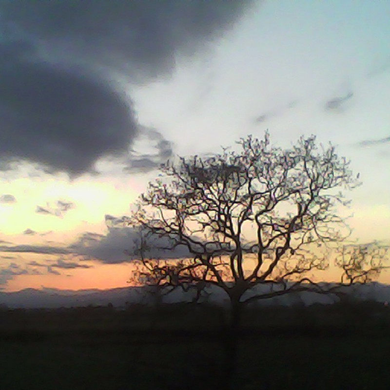 2014/01/13_夕暮れの木