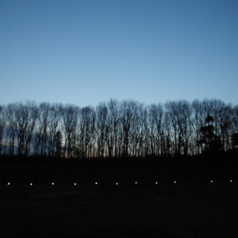 2014/01/18_夕暮れの木
