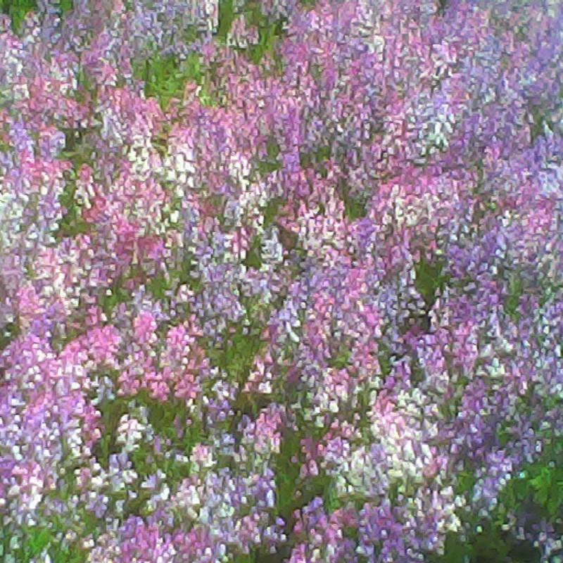 2015/04/29_あの日見た花の名前を僕はまだ知らない