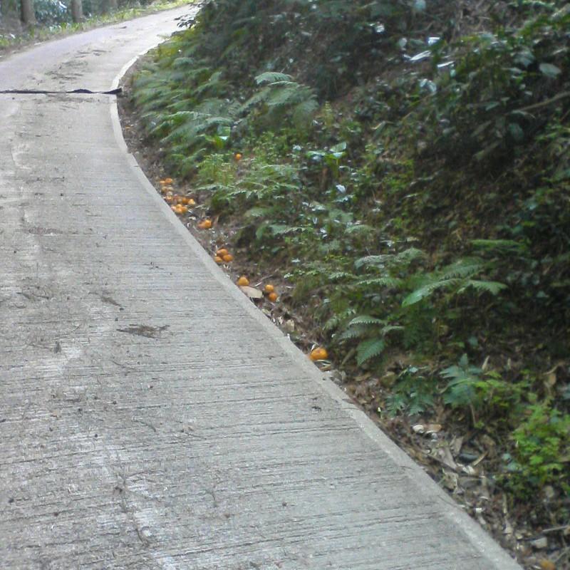 2012/04/07_みかんが落ちた林道