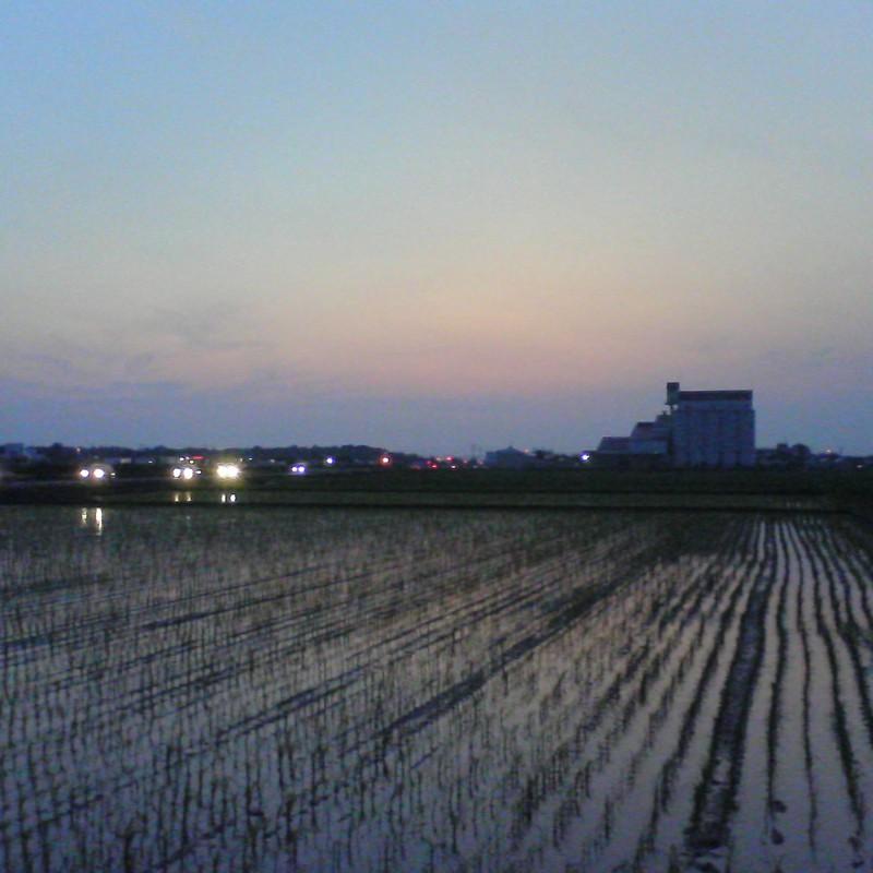 2015/07/11_水田の夕暮れ