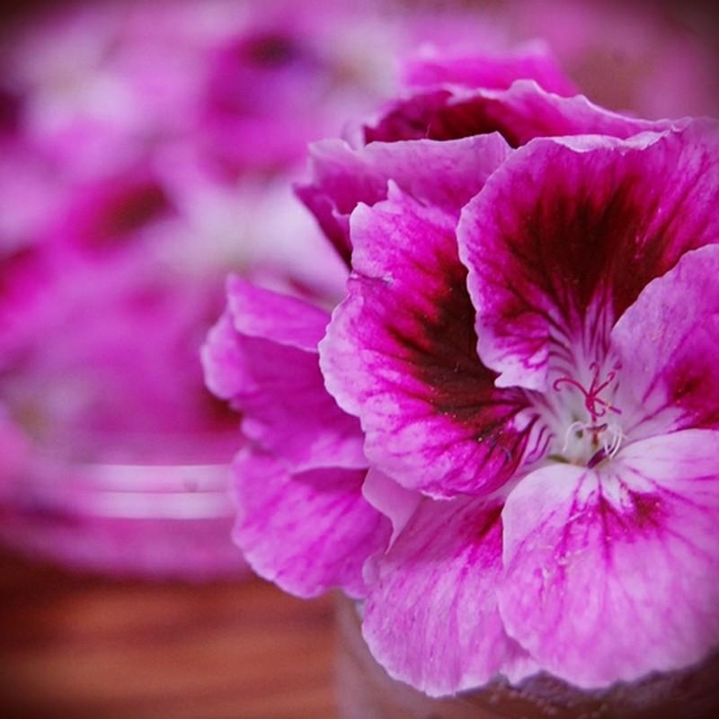 おかんと花と花瓶