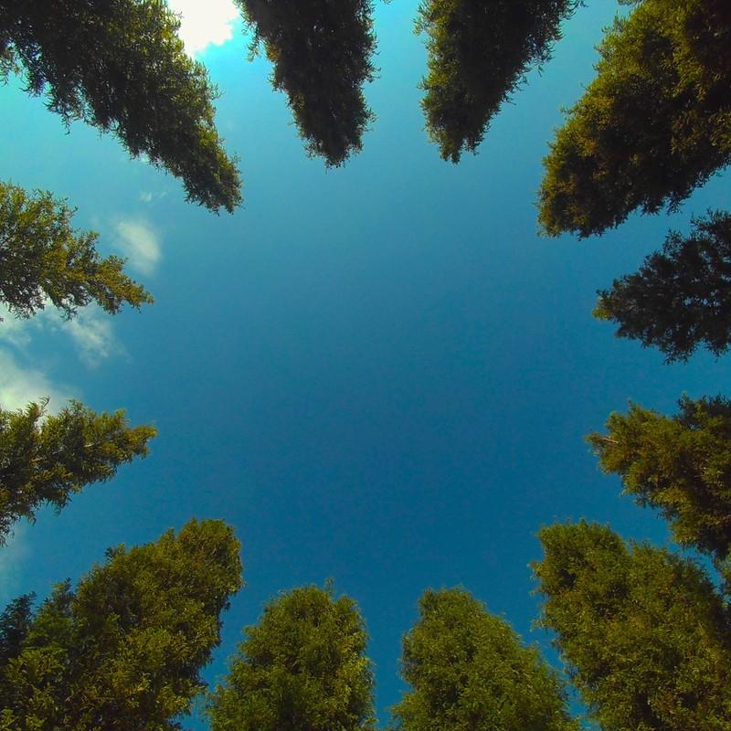 木の寄り合い