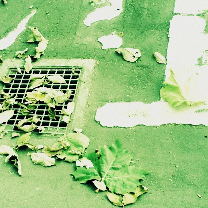 排水溝と枯れ葉