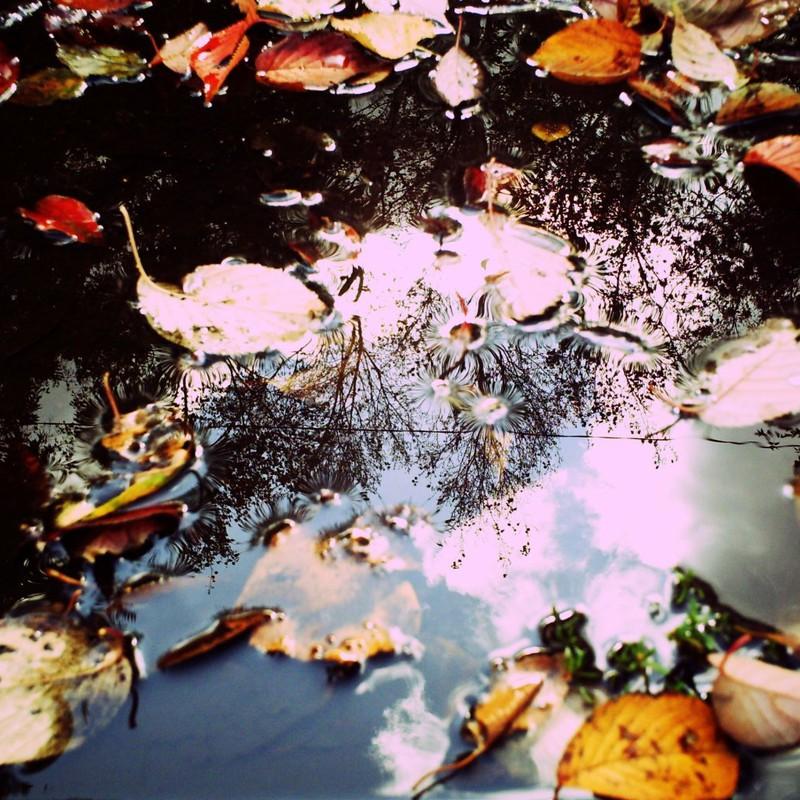 水たまりに秋