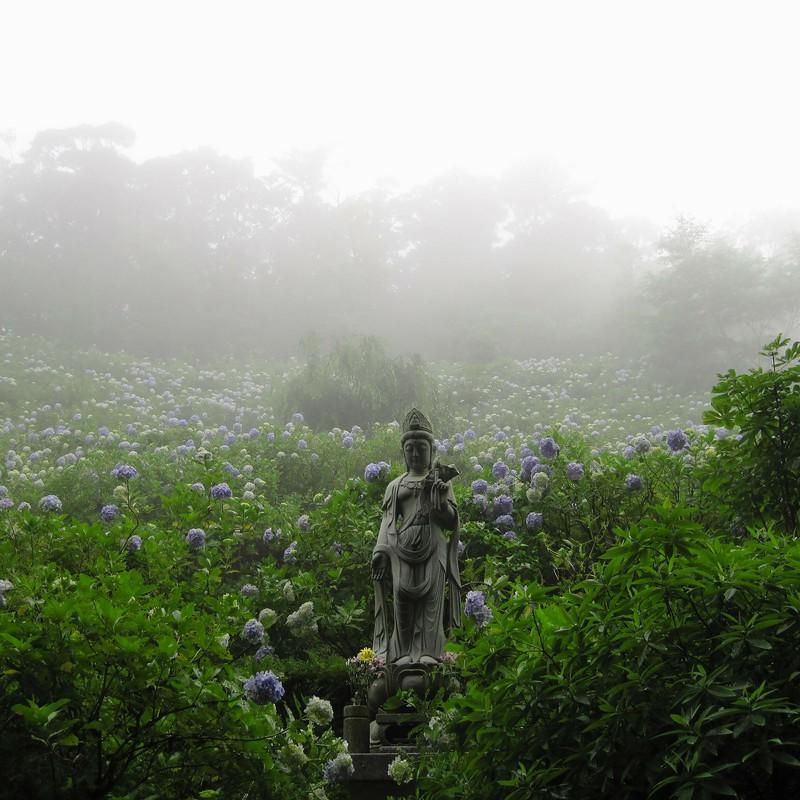 霧と紫陽花