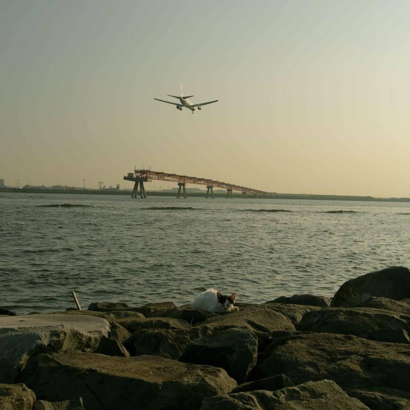 猫と海と飛行機のコラボ