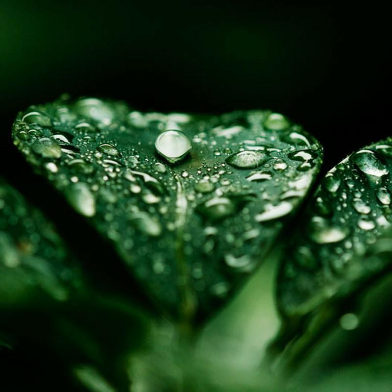 雨にも負けず・・・