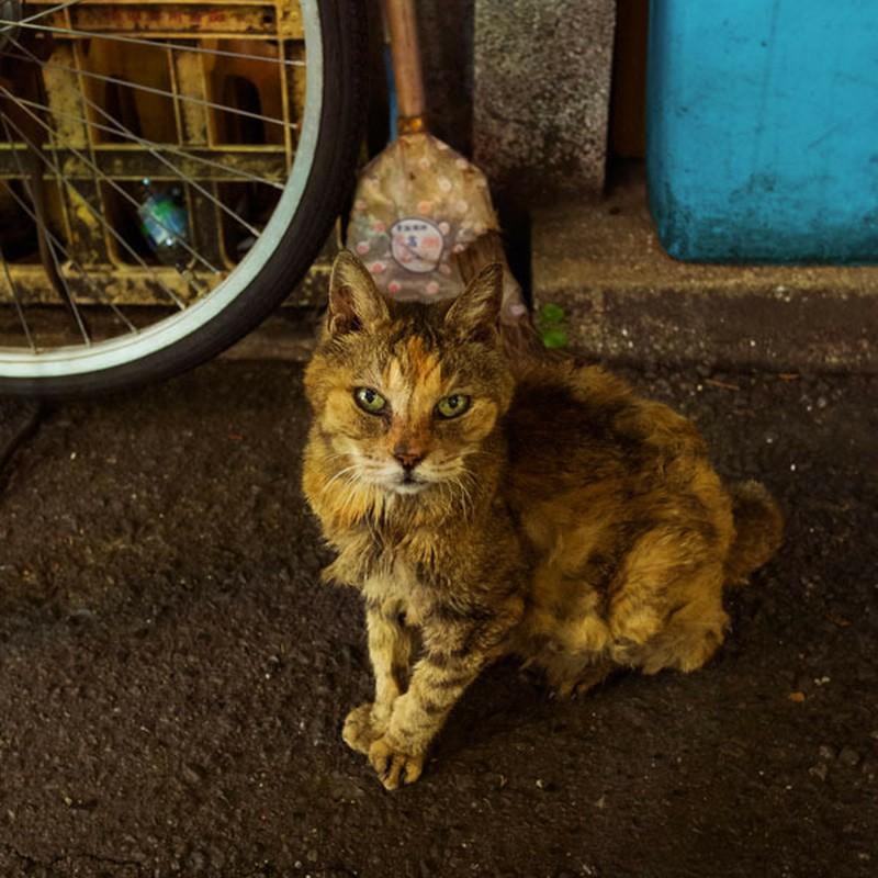# 3    (中華街の猫)