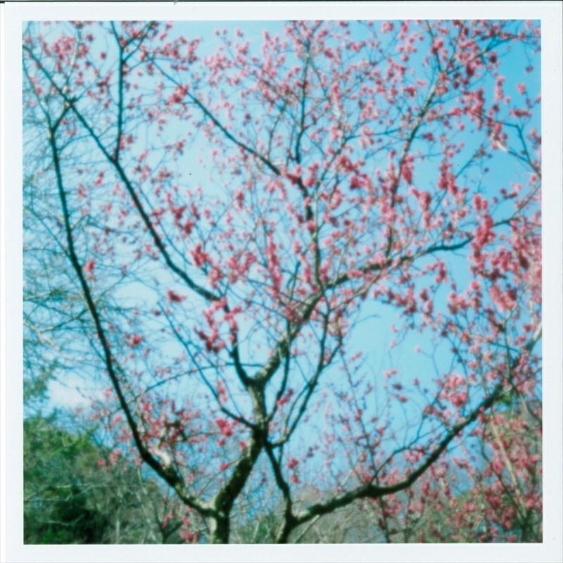 Re:梅の花