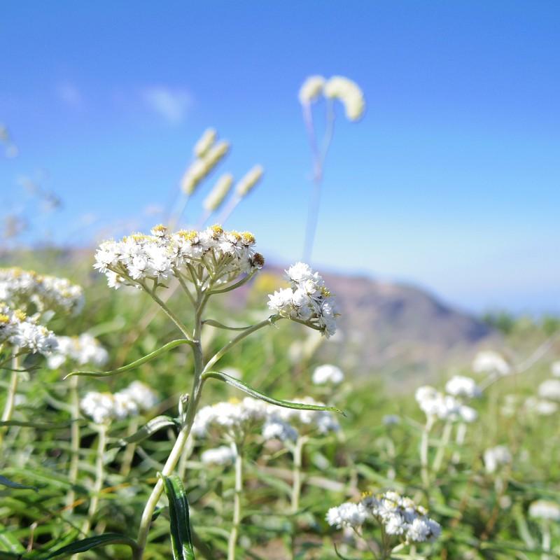 高野に咲く