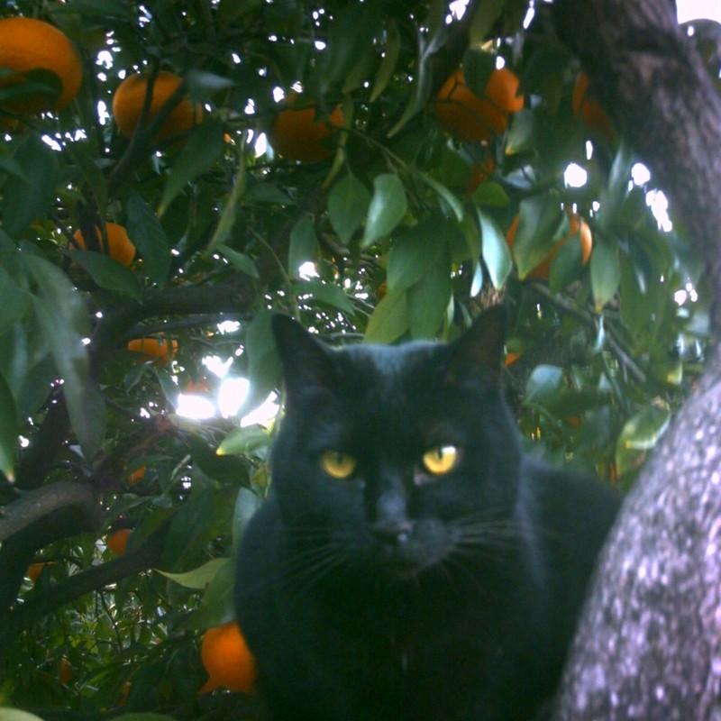夏みかんと黒猫
