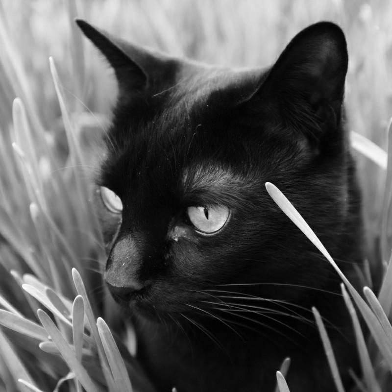 臨戦態勢のBLACK CAT