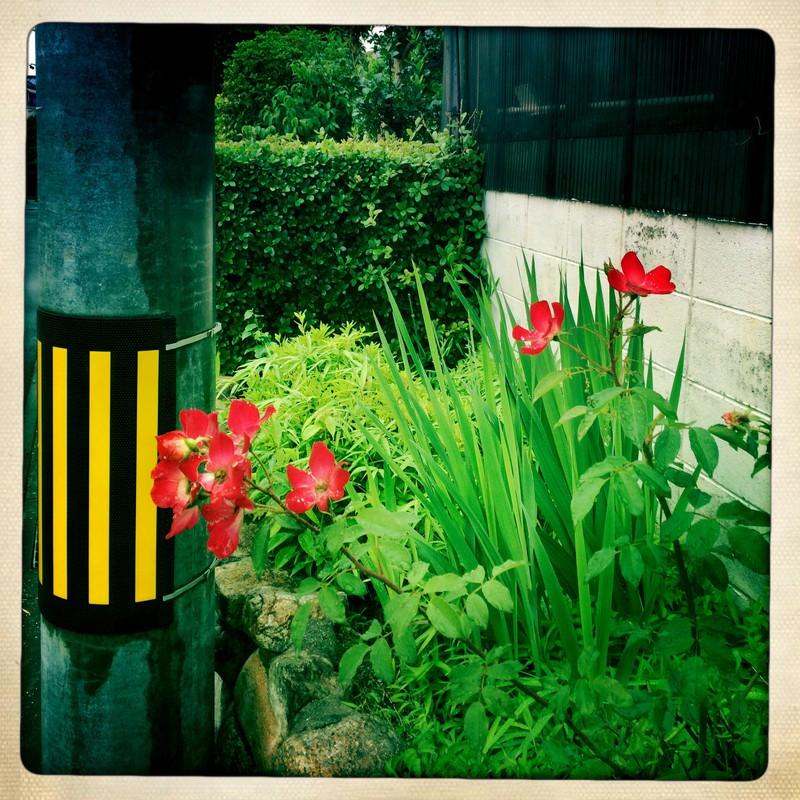 電柱と緑と赤と...Ⅰ