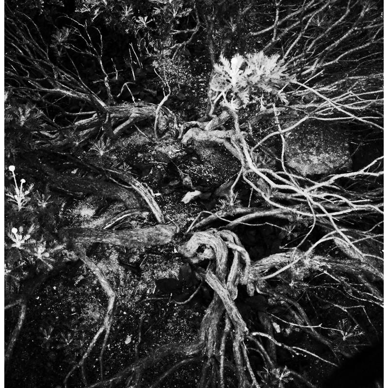 Noisy Roots...