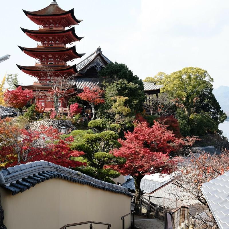安芸の宮島の秋