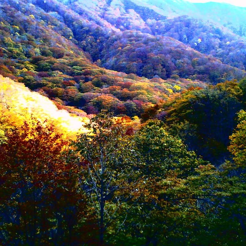 深いめく秋
