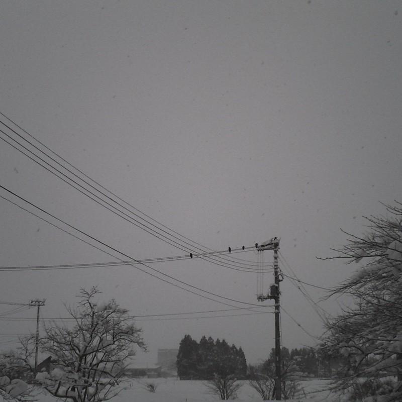 雪!降りますねぇ~かぁーかぁー