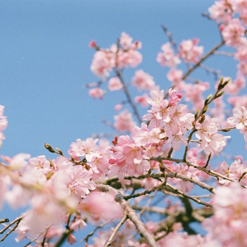 今年も春がきた