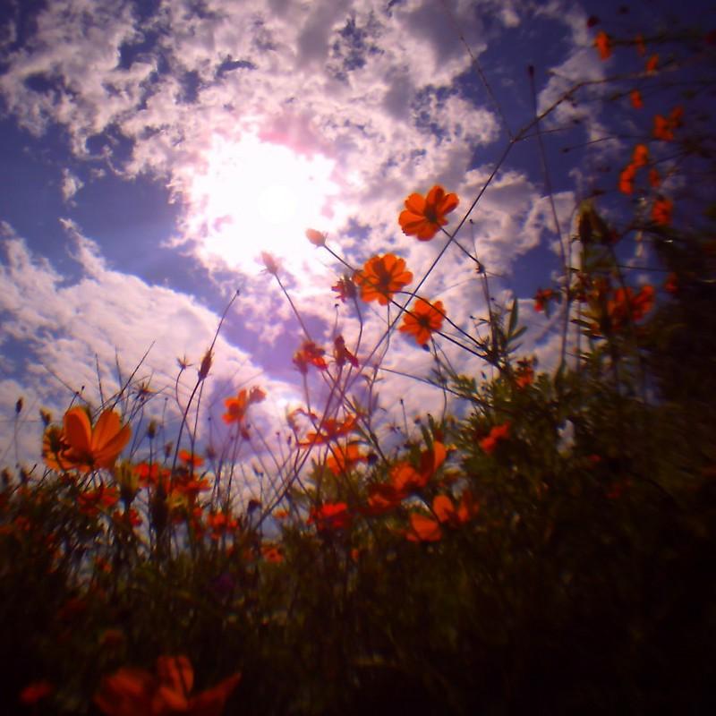 ある日曜の秋の空
