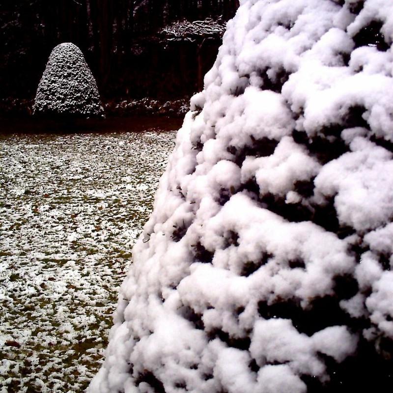 隣の木も白かった