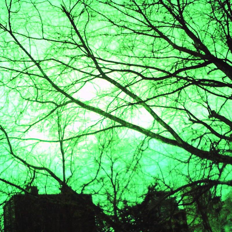 木々とビルと濡れた窓