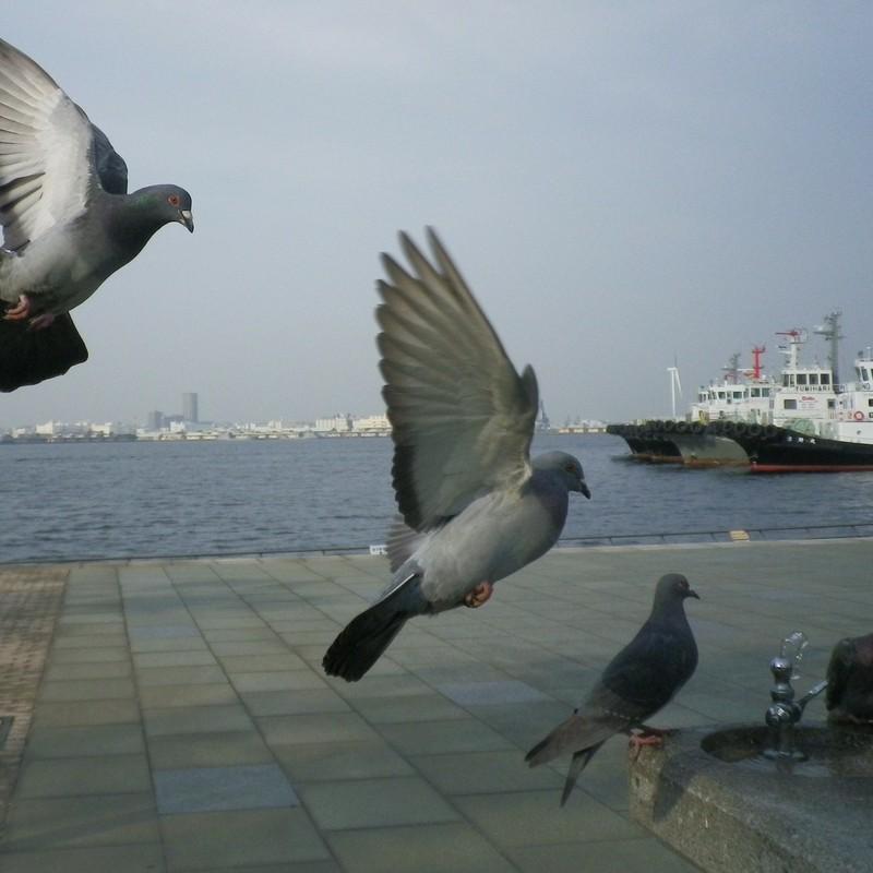 Re:鳩を狙う