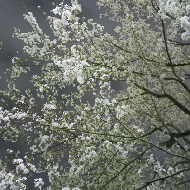 浮かび上がる春イロ