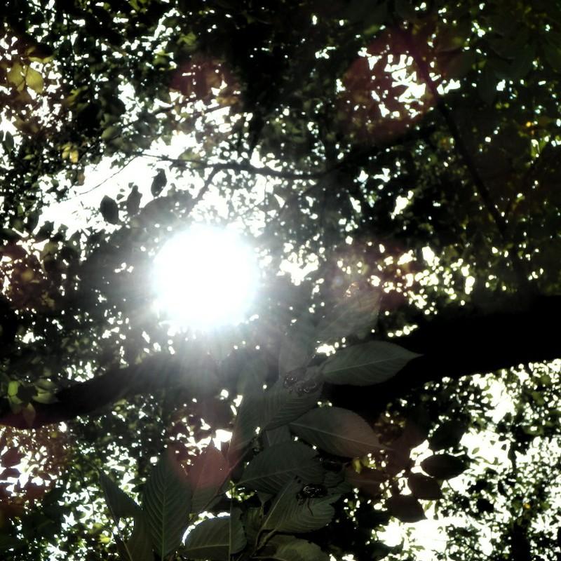 蝉しぐれ・『真夏の音』