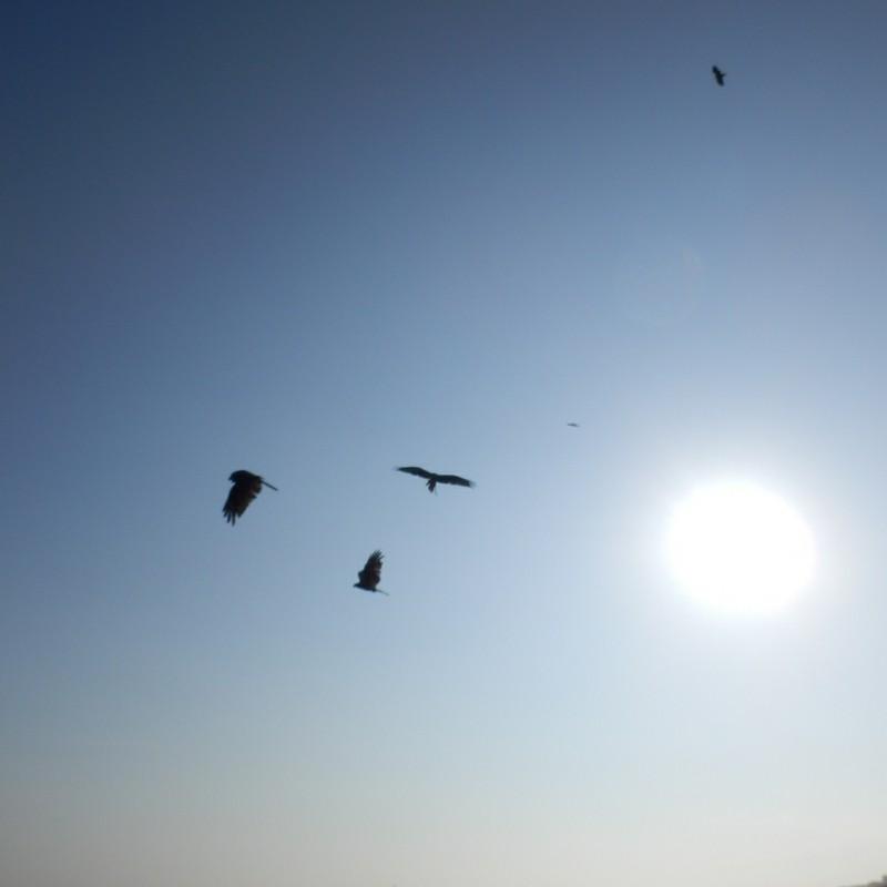 夏の太陽とトンビ