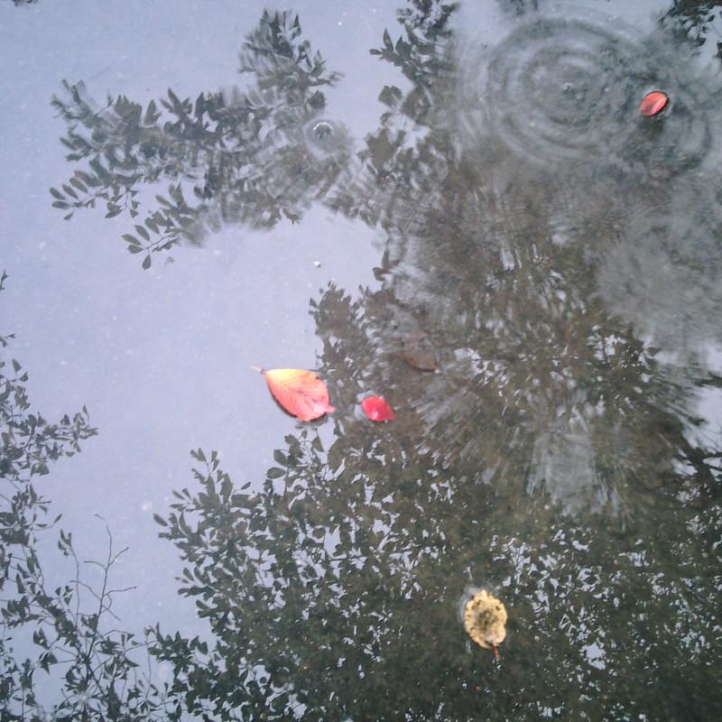 雨音に響く秋