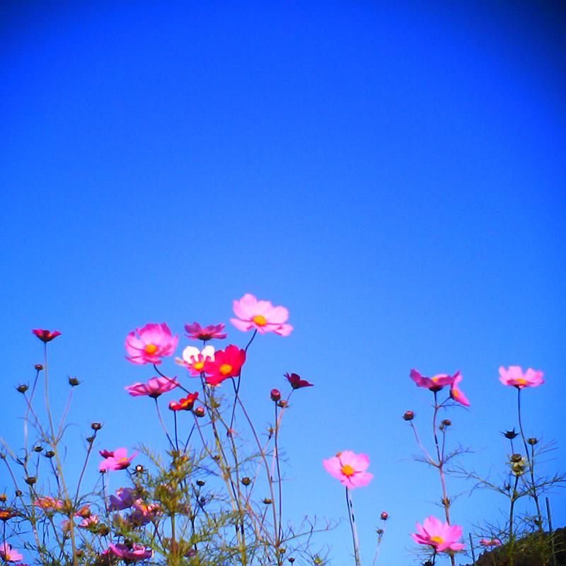 立冬越しても秋の桜