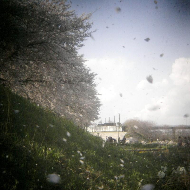 春風に儚き華