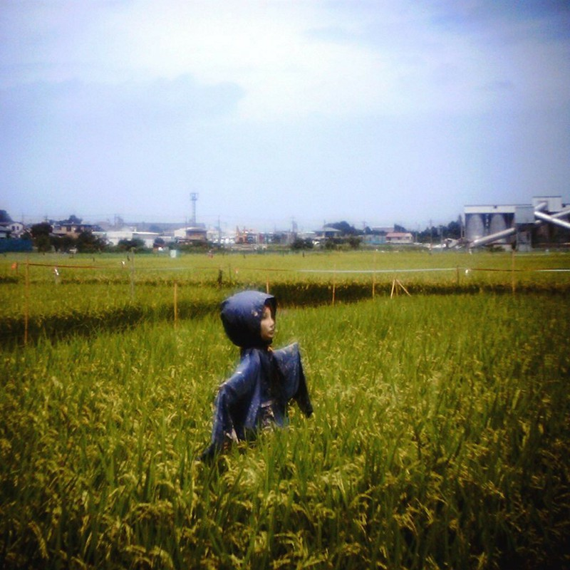 田園の日常