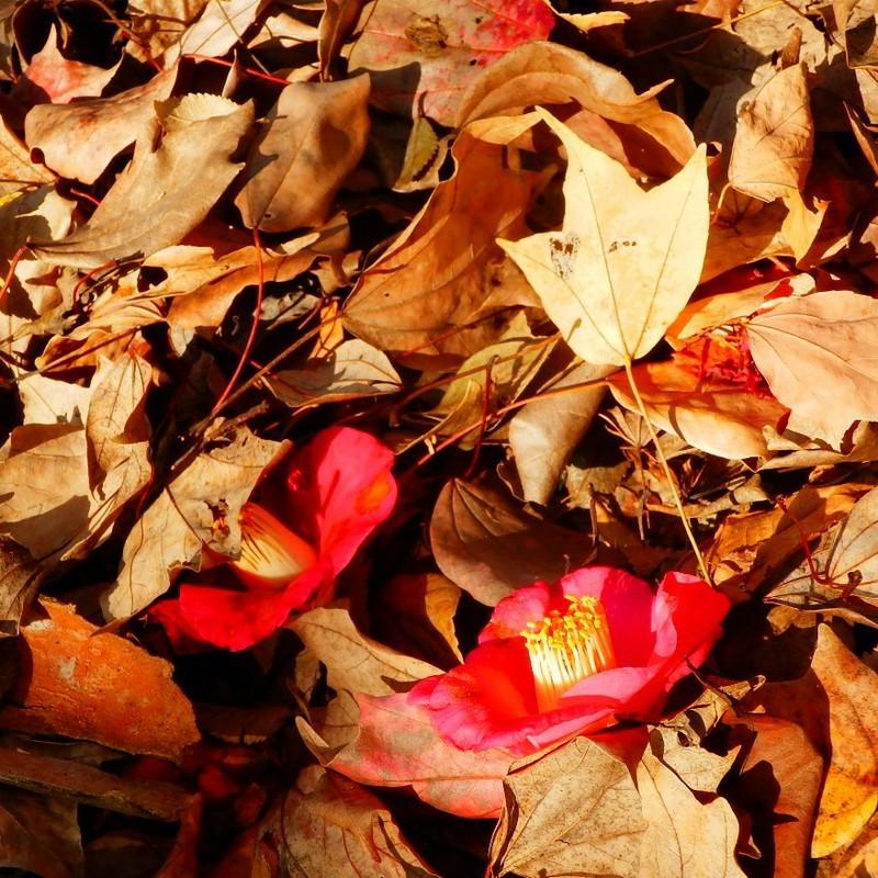 日溜まり落ち葉のなかで
