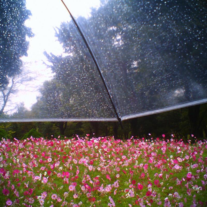 秋雨前線停滞中