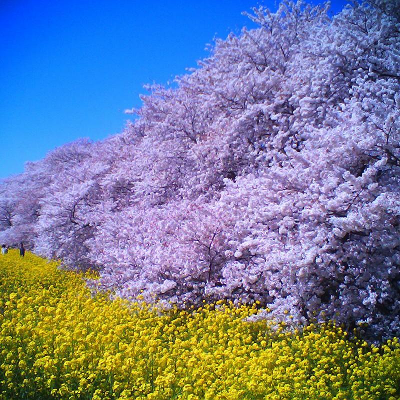 湧き上がる春