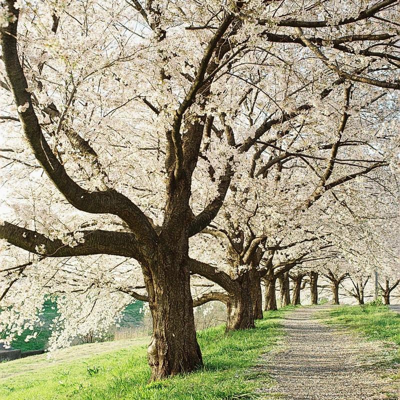 春につつまれて